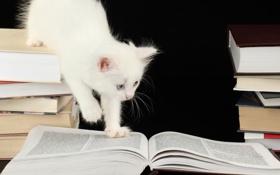 Картинка книги, котёнок, любопытство, страницы, голубоглазый