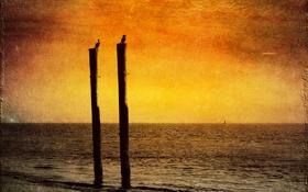 Обои море, пейзаж, закат, птицы, стиль