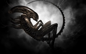 Картинка чужой, Alien, ксеноморф