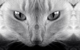 Обои кот, cat, котенок, черно-белое, кошка