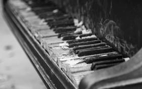 Обои макро, музыка, пианино