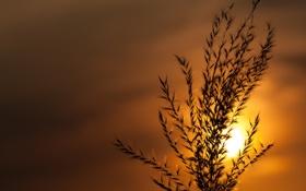Обои небо, солнце, закат, растение, стебель
