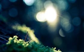 Картинка цвета, свет, природа, свечение, размытость, травка, эффекты