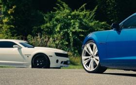 Обои белый, деревья, синий, Chevrolet, Camaro, white, шевроле