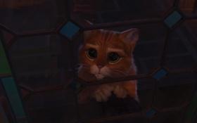 Картинка глаза, кот, Шрек