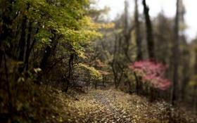 Картинка осень, лес, деревья, природа, листва, розмытость, лорожка