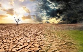 Картинка тучи, дождь, дерево, засуха, травка, сезон дождей
