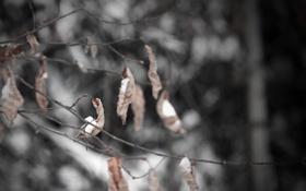 Обои листья, деревья, ветки, природа, Макро, macro