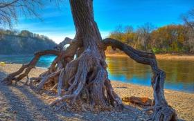 Картинка осень, лес, небо, река, дерево, корень, hdr