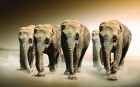 Картинка животные, сепия, слоны
