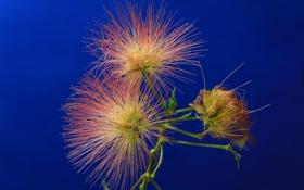 Обои цветок, растение, экзотика