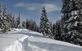 Обои зима, лес, небо, снег, деревья, ель, склон