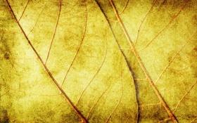 Обои листья, фон, текстура, желтые
