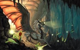 Обои дракон, крылья, огоньки, арт, существа, фонарь, пещера