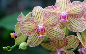 Картинка макро, экзотика, орхидея