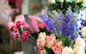 Обои цветы, розы, гвоздики