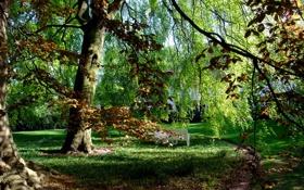 Обои осень, трава, деревья, парк, Гамбург, скамья