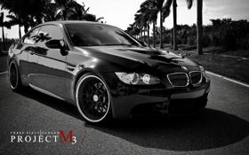 Обои пальмы, белая, black, черно, BMW M3