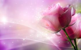 Обои макро, линии, абстракция, блики, фон, розы