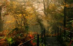Картинка осень, солнце, деревья, парк, спуск, Англия, перила