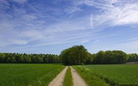 Обои лес, зелень, дорога, лето