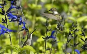Картинка лето, цветы, птицы