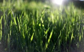 Обои зелень, лето, трава, солнце, макро, лучи, природа