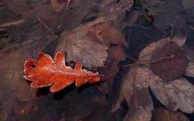 Картинка лед, иней, осень, лист, кристаллы