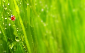 Картинка зелень, трава, капли, макро, природа, роса, утро