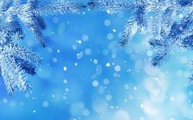 Обои зима, снег, елочка, макро, иней