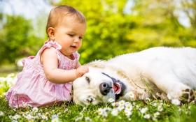 Обои лето, трава, природа, ребенок, собака, девочка, друзья