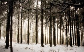Обои зима, лес, снег, деревья, природа, фото