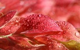 Картинка осень, листья, вода, капли, природа, роса, цвет