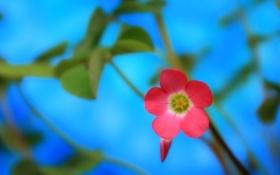 Картинка макро, цветы, природа, фон, розовый цветок