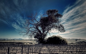 Картинка поле, небо, облака, дерево, даль, горизонт, виноград