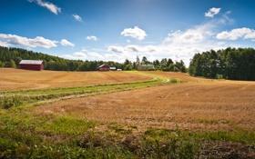 Картинка дорога, поле, лес, небо, трава, облака, деревья