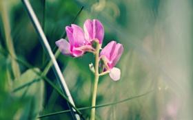 Обои розовый, зелёный, трава, горошек