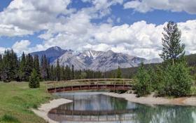 Картинка лес, деревья, горы, мост, пруд, Канада, Альберта