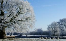 Обои лес, овцы, фото, зима, поле, дерево