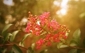 Картинка листья, солнце, лучи, цветы, природа, стебли, обои