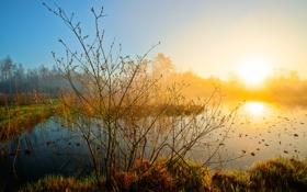 Обои небо, трава, солнце, природа, озеро, рассвет, дымка