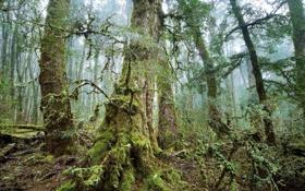 Картинка лес, деревья, природа, фото, мох