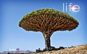Картинка life, tree, discovery