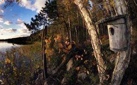 Картинка осень, озеро, Birdhouse