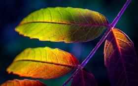 Обои осень, макро, лист, краски
