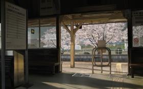 Обои улица, здание, сакура, скамейки, турникет