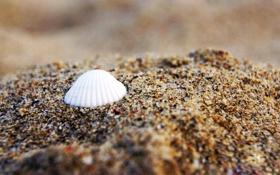 Картинка песок, shell, venitomusic, macro, sand, ракушка, макро
