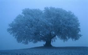 Обои Снег, Обои, Дерево