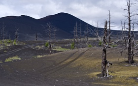 Обои деревья, природа, Камчатка