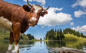 Обои деревья, пейзаж, горы, озеро, корова, Швейцария, рога
